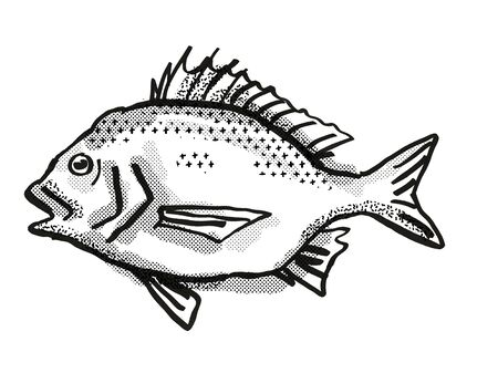 Retro cartoon style drawing of a North West Black Bream, a native Australian marine life species viewed from side on isolated white background done in black and white Stock Photo