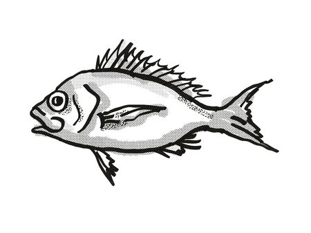 Retro cartoon style drawing of a Western Orange Perch , a native Australian marine life species viewed from side on isolated white background done in black and white. Stock fotó