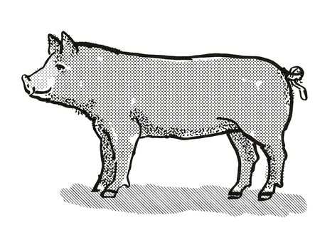 Retro cartoon style drawing of a Berkshire sow or boar, a pig breed viewed from side on isolated white background done in black and white Imagens