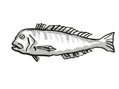 Retro cartoon style drawing of a Australian Barred Tilefish  , a native Australian marine life species viewed from side on isolated white background done in black and white. Stock Photo