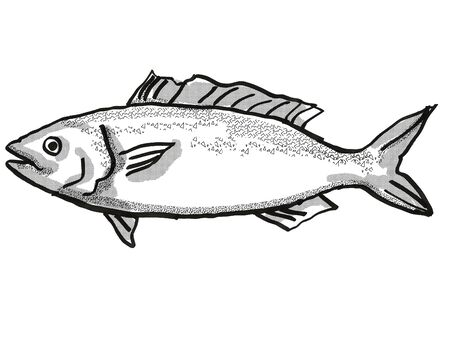 Retro cartoon style drawing of a kahawai , a native New Zealand marine life species viewed from side on isolated white background done in black and white Фото со стока