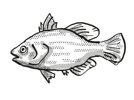 Retro cartoon style drawing of a Spikey Bass , a native Australian marine life species viewed from side on isolated white background done in black and white.