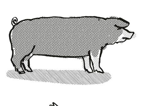Retro cartoon style drawing of a Poland China sow or boar, a pig breed viewed from side on isolated white background done in black and white