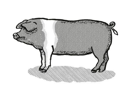 Retro cartoon style drawing of a British Saddleback sow or boar, a pig breed viewed from side on isolated white background done in black and white