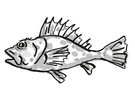 Retro cartoon style drawing of a Western Scorpionfish , a native Australian marine life species viewed from side on isolated white background done in black and white.