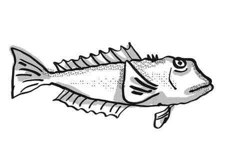 Retro cartoon style drawing of a blue cod , a native New Zealand marine life species viewed from side on isolated white background done in black and white