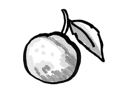 Retro cartoon style drawing of an orange fruit with leaf on isolated white background done in black and white