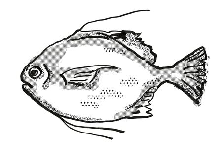 Retro cartoon style drawing of a Threadfin Scat  , a native Australian marine life species viewed from side on isolated white background done in black and white. Stock Photo