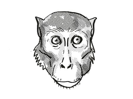 Retro cartoon style drawing head of a Rhesus Macaque , a monkey species viewed from front on isolated white background done in black and white