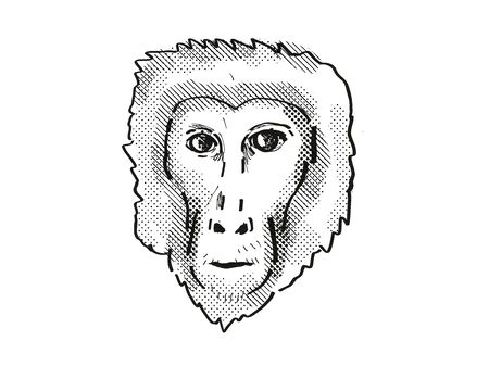 Retro cartoon style drawing head of a Assam Macaque , a monkey species viewed from front on isolated white background done in black and white