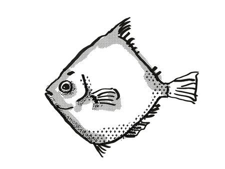 Retro cartoon style drawing of a Rosy Deepsea Boarfish , a native Australian marine life species viewed from side on isolated white background done in black and white. 版權商用圖片 - 130282769