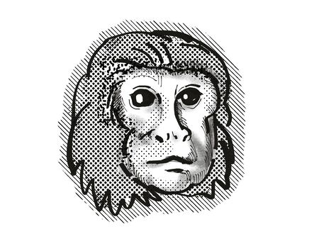 Retro cartoon style drawing head of a Golden Lion Tamarin , a monkey species viewed from front on isolated white background done in black and white Stock Photo