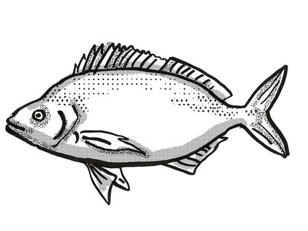 Retro cartoon style drawing of a Jackass Morwong, a native Australian marine life species viewed from side on isolated white background done in black and white Stock Photo