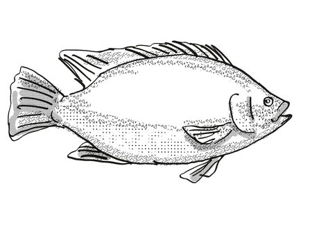 Retro cartoon style drawing of a Tilapia, a mainly freshwater fish marine life species viewed from side on isolated white background done in black and white