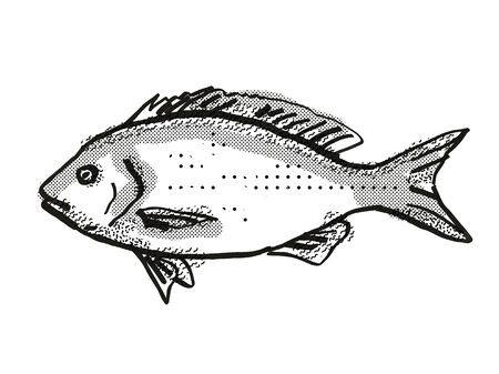 Retro cartoon style drawing of a Blue Drummer , a native Australian marine life fish species viewed from side on isolated white background done in black and white.