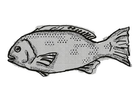 Retro cartoon style drawing of a Western Rock Blackfish , a native Australian marine life fish species viewed from side on isolated white background done in black and white.