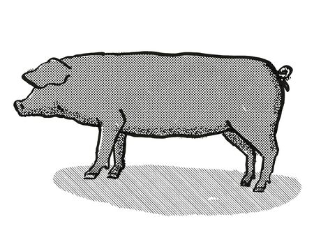 Retro cartoon style drawing of a Large Black sow or boar, a pig breed viewed from side on isolated white background done in black and white