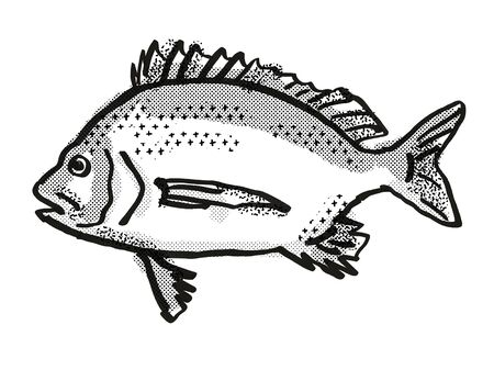 Retro cartoon style drawing of a Pikey Bream , a native Australian marine life species viewed from side on isolated white background done in black and white Stock Photo