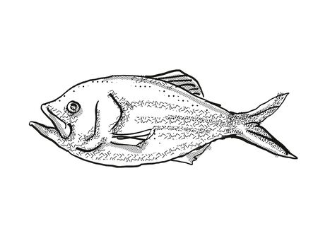 Retro cartoon style drawing of a golden snapper , a native New Zealand marine life species viewed from side on isolated white background done in black and white Фото со стока