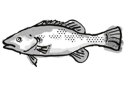 Retro cartoon style drawing of a Trout Cod  , a native Australian marine life species viewed from side on isolated white background done in black and white.