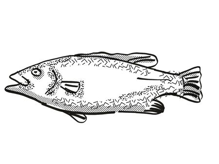 Retro cartoon style drawing of a hapuku , a native New Zealand marine life species viewed from side on isolated white background done in black and white
