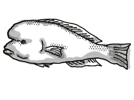 Retro cartoon style drawing of a Doubleheader , a native Australian marine life species viewed from side on isolated white background done in black and white.