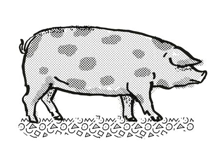 Retro cartoon style drawing of an Oxford Sandy and Black  sow or boar, a pig breed viewed from side on isolated white background done in black and white