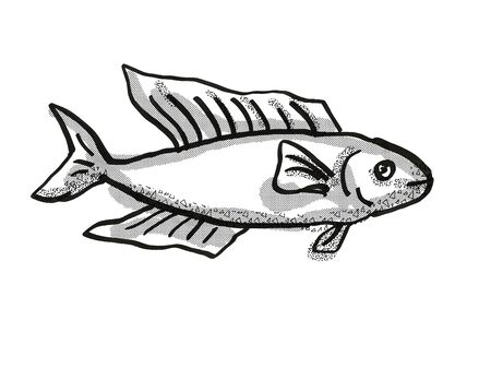 Retro cartoon style drawing of a Butterfish or Odax Pullus , a native New Zealand marine life species viewed from side on isolated white background done in black and white Фото со стока