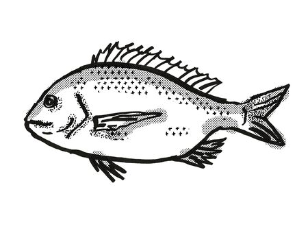 Retro cartoon style drawing of a silver bream , a native Australian marine life species viewed from side on isolated white background done in black and white