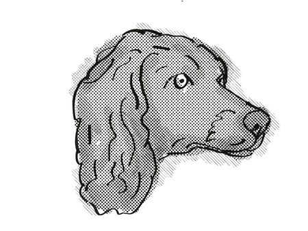 Retro cartoon style drawing of head of a Boykin Spaniel  , a domestic dog or canine breed on isolated white background done in black and white.