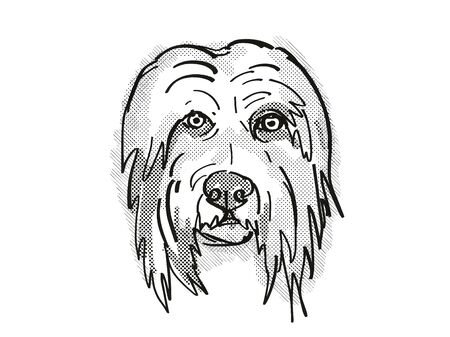 Retro cartoon style drawing of head of a Bearded Collie  , a domestic dog or canine breed on isolated white background done in black and white.