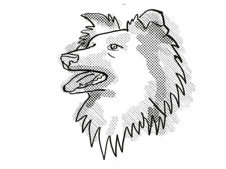 Retro cartoon style drawing of head of a Shetland Sheepdog , a domestic dog or canine breed on isolated white background done in black and white.