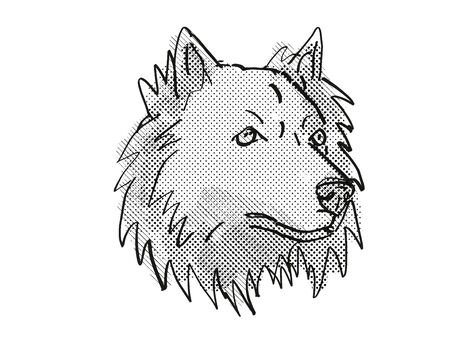 Retro cartoon style drawing of head of a Chusky mixed breed dog, a cross between the Chow Chow and Siberian Husky dog on isolated white background done in black and white. Stock Photo