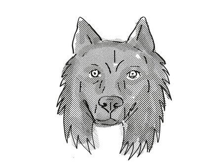 Retro cartoon style drawing of head of a Belgian Sheepdog, a domestic dog or canine breed on isolated white background done in black and white.