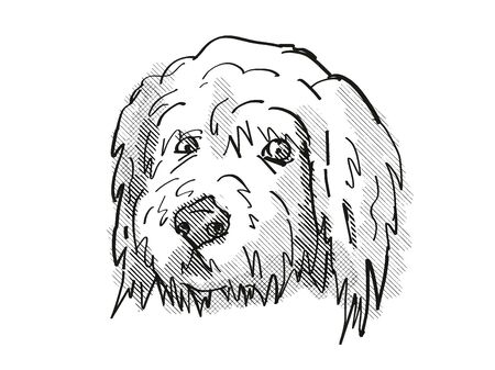 Retro cartoon style drawing of head of a Goldendoodle, a domestic dog or canine breed on isolated white background done in black and white.