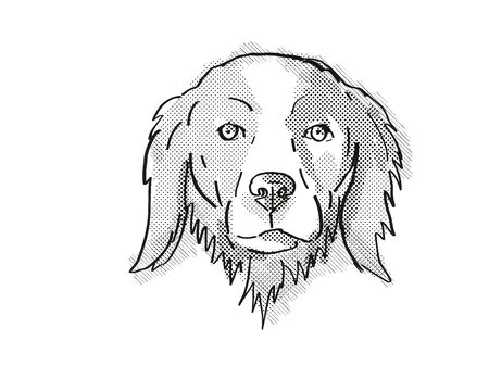 Retro cartoon style drawing of head of a Brittany or Brittany Spaniel, a domestic dog or canine breed on isolated white background done in black and white.