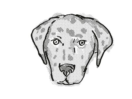 Retro cartoon style drawing of head of an American Leopard Hound  , a domestic dog or canine breed on isolated white background done in black and white.