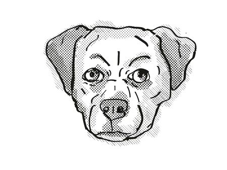 Retro cartoon style drawing of head of a Chug, Pug Chihuahua Pug mix, Pughuahua, or Pugwawa, a domestic dog or canine breed on isolated white background done in black and white. Stock Photo