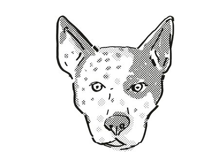 Retro cartoon style drawing of head of an Australian Cattle Dog  , a domestic dog or canine breed on isolated white background done in black and white.