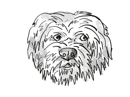 Retro cartoon style drawing of head of a Havanese dog, a domestic canine breed on isolated white background done in black and white.