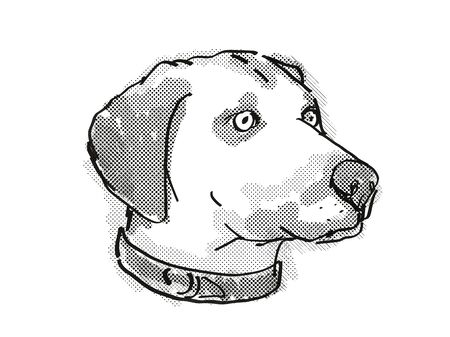 Retro cartoon style drawing of head of a Black Mouth Cur , a domestic dog or canine breed on isolated white background done in black and white.