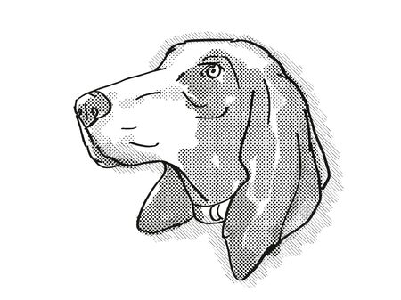 Retro cartoon style drawing of head of a Bracco Italiano, a domestic dog or canine breed on isolated white background done in black and white.