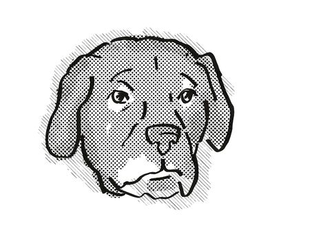 Retro cartoon style drawing of head of an Afador or Afghan Lab, a domestic dog or canine breed on isolated white background done in black and white. Banco de Imagens