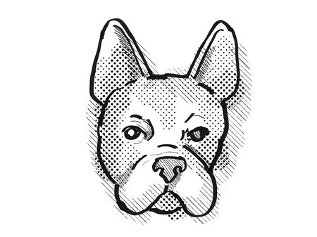 Retro cartoon style drawing of head of a Boston Terrier  , a domestic dog or canine breed on isolated white background done in black and white.