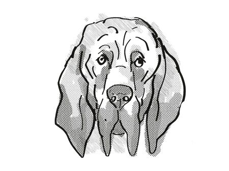 Retro cartoon style drawing of head of a Bloodhound  , a domestic dog or canine breed on isolated white background done in black and white. Фото со стока