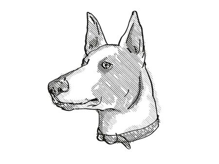 Retro cartoon style drawing of head of a Ibizan Hound, a domestic dog or canine breed on isolated white background done in black and white.