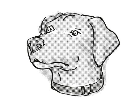Retro cartoon style drawing of head of a Blue Lacy, also called the Lacy Dog  , a domestic dog or canine breed on isolated white background done in black and white.