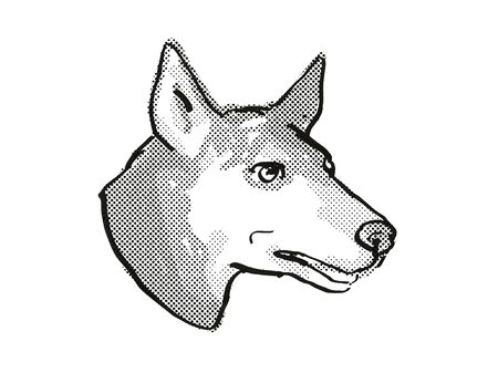 Retro cartoon style drawing of head of an Australian Kelpie  , a domestic dog or canine breed on isolated white background done in black and white.