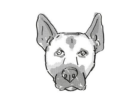 Retro cartoon style drawing of head of a Belgian Malinois , a domestic dog or canine breed on isolated white background done in black and white.