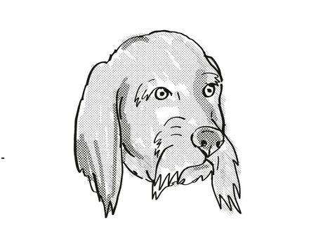 Retro cartoon style drawing of head of a Basset Fauve de Bretagne  , a domestic dog or canine breed on isolated white background done in black and white.